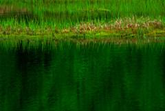 心象風景 緑 IMGP7755zz