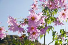 咲き競う IMGP9749zz