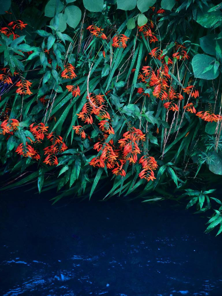 水辺に咲く P1330180zz