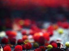 赤い実が落ちた P130090zz