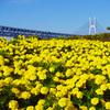 瀬戸大橋と花園 DSC00012zz