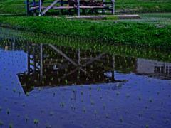 梅雨空を映して  P1280007zz
