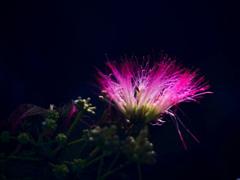 妖艶な花 P1300991zz