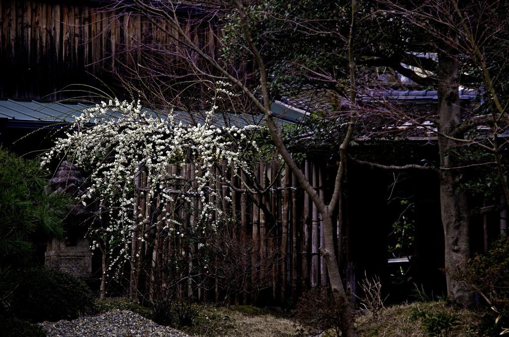 春の京都で一枚 _IGP5727zz