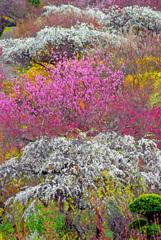 雪国 早春の譜 IMGP1587zz