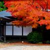 静寂の庭 午後の光 IMGP0190zz