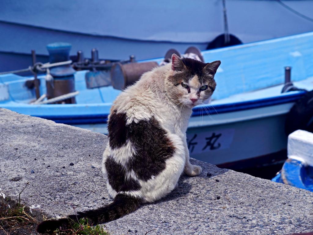 漁港のやさぐれ猫 P1300099zz
