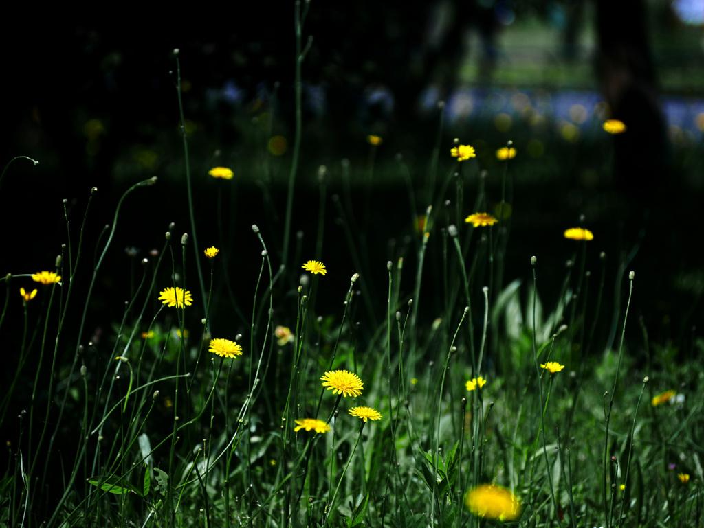 野生の花園 P1270217zz