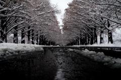 冬枯れの景 IMGP8965zz