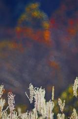 秋色を背負う _IGP7930z