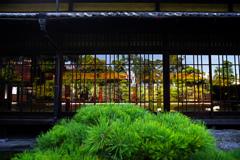庭園もまた一幅の絵画 IMGP8504zz