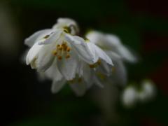 朝の花 P1180857zz