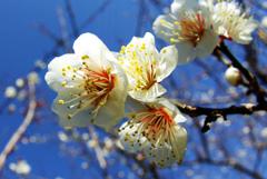 咲き競う IMGP0081z
