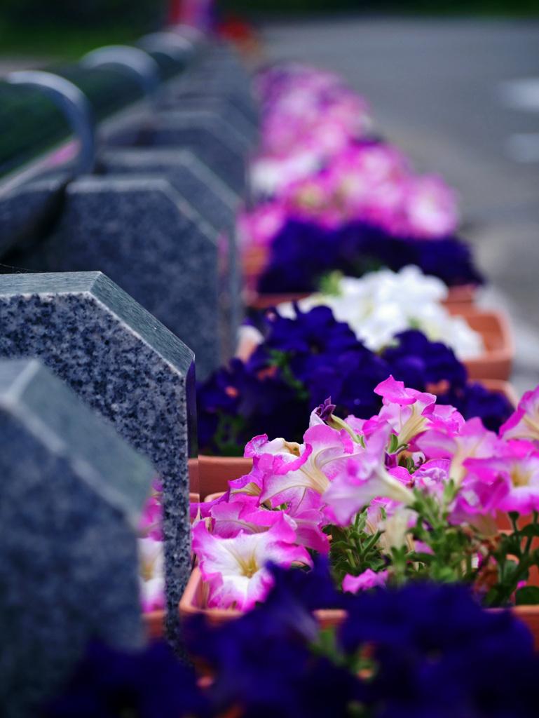 石の柵とプランターの花 P1300175zz