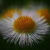 小さき花 P1200174zz