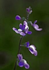 野に咲く花 P1180905zz