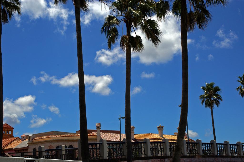 ヤシの木と夏雲