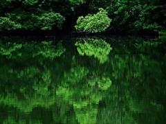 Green reflection P1270900zz