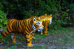 不思議な動物園 _IMG4466zz