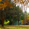 紅葉の中でお昼ごはん _IGP9502zz