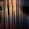 自然湖の夜明け IMGP0527zz