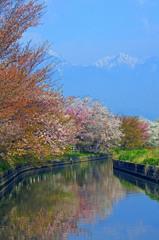 拾ヶ堰の桜 _IGP9831zz