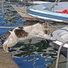船に飛び乗る猫 P1200003zz