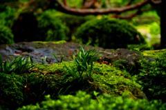 苔の庭で IMGP2855zz