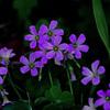 日陰に咲く P1300183zz