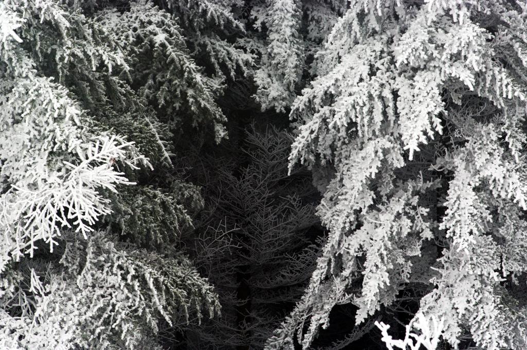 樹氷の海 IMGP5072zz