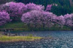 仁科の春 _IGP3606zz