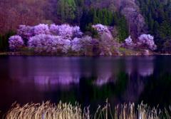 幻想の湖 P1000465zz