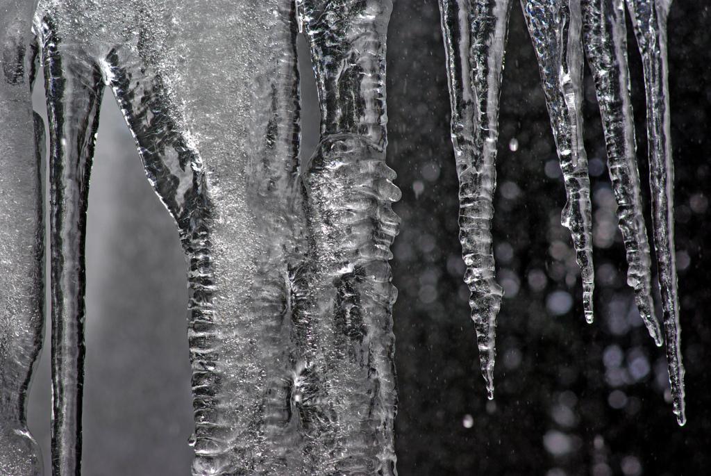 垂氷の森 IMGP0412zz