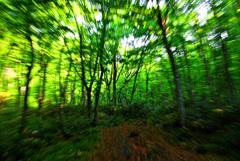 森の英気 IMGP4358zz