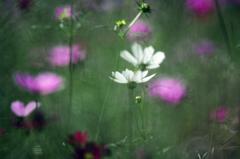 幻想の花園 IMGP9759zz