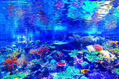 サンゴの海へようこそ IMGP2778zz