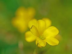 野に咲く名も知らぬ花 P1160866z