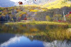 秋 真っ盛り _IGP7472zz