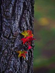 小さい秋見つけた P1390821zz