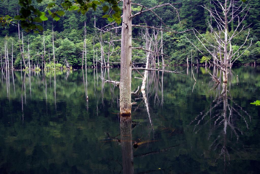 立ち枯れ 自然湖