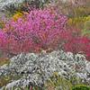 色とりどりの春風景 IMGP1585zz