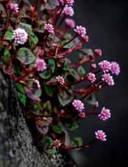 壁に花 P1180875zz