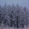 樹氷の森 IMGP0243zz