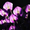 紫の花弁 IMGP7027zz