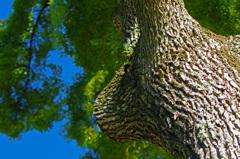 大樹の風格 _IMG4804zz