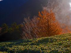 朝の陽光 P1480381zz