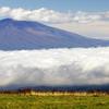 浅間山 雲海
