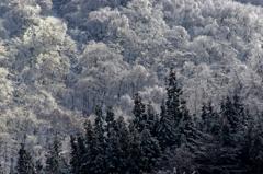 樹氷の森 IMGP5217zz
