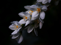 今朝の庭花 P1180933zz