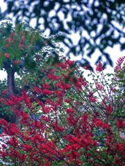 ディエゴの花が咲きました P1300069zz